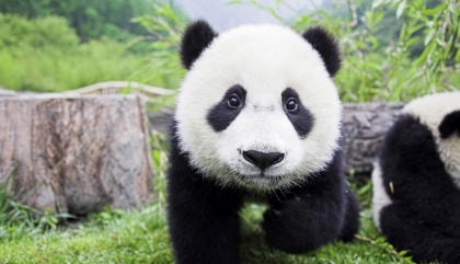 I Am A Panda: The Best Concealers