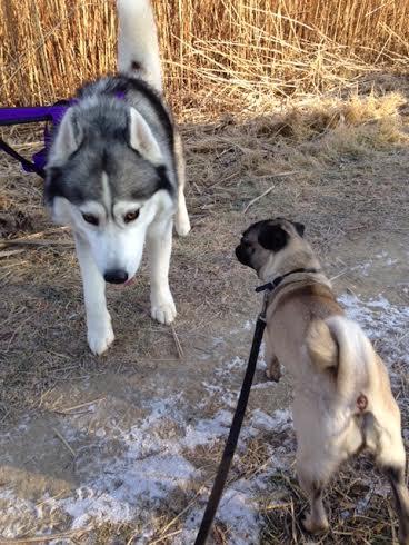 Sport&Santé: Cardio Canin avec Lisa le chien - Le Cahier