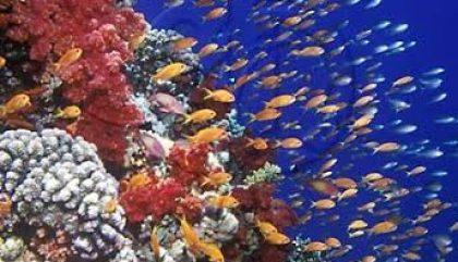 Guide du débutant : Plongée sous-marine