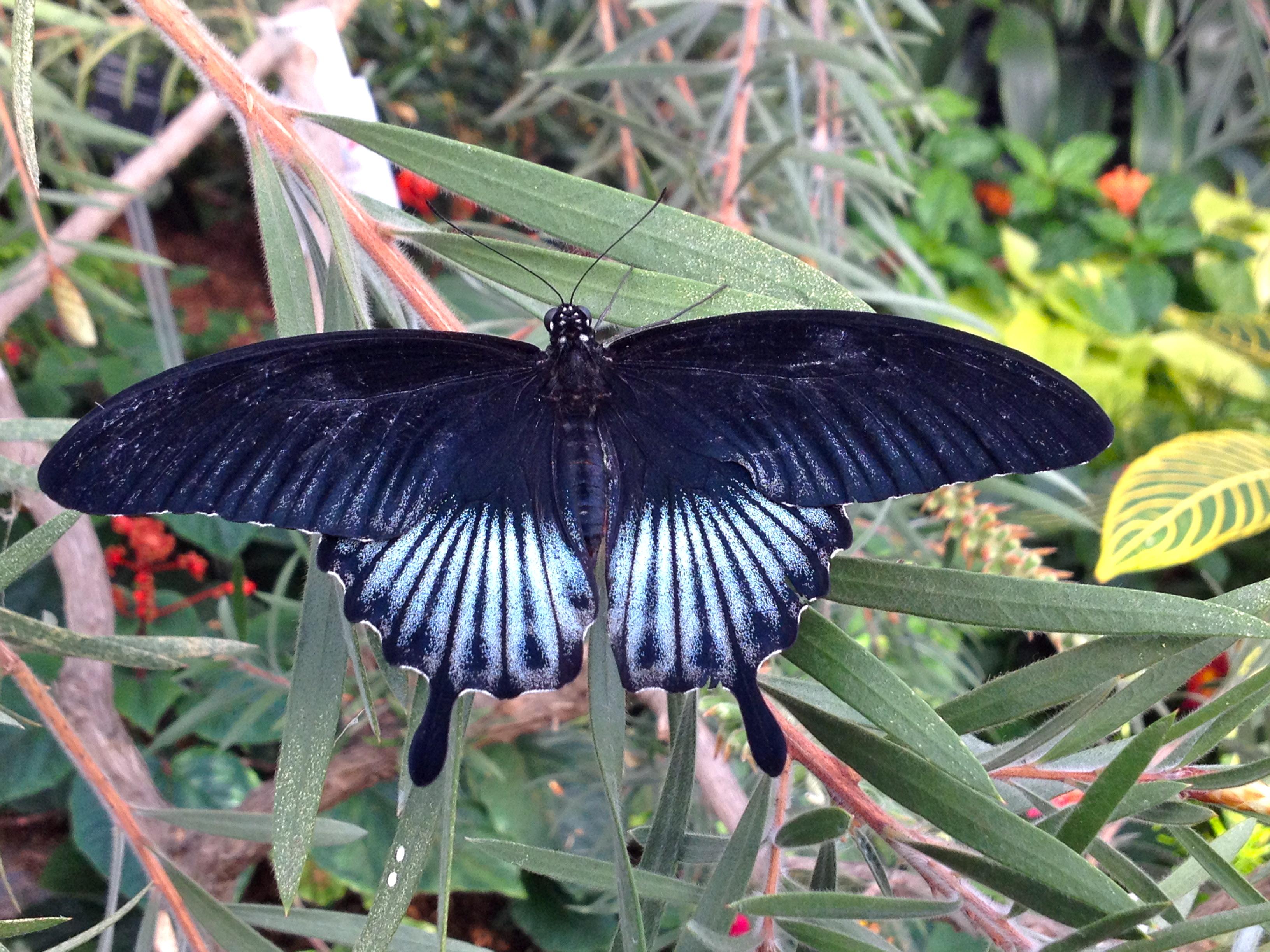 Chenille ou papillon le cahier for Papillon jardin botanique 2015