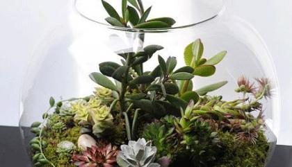 Trucs et astuces pour un terrarium de rêve