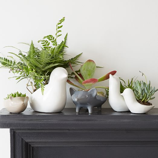 plante, terrarium, animaux, déco, renard, canard