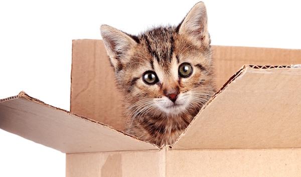 adresse santevet assurance sante chat