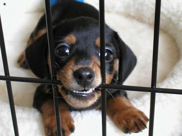 dogtrainingbasics.com