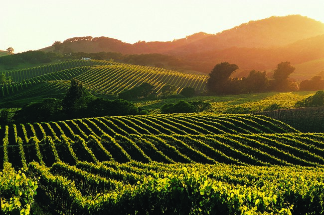 napa valley, voyage, trip, fun explore