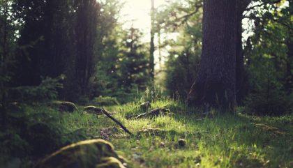 Jour de la Terre: 10 façons de protéger l'environnement au quotidien