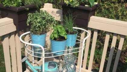 An Urban Garden with Scotts Miracle-Gro
