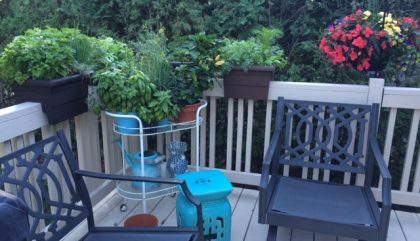 Growing your Own Herbs and Veggies
