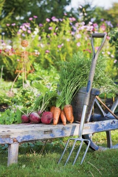 jardinage, santé