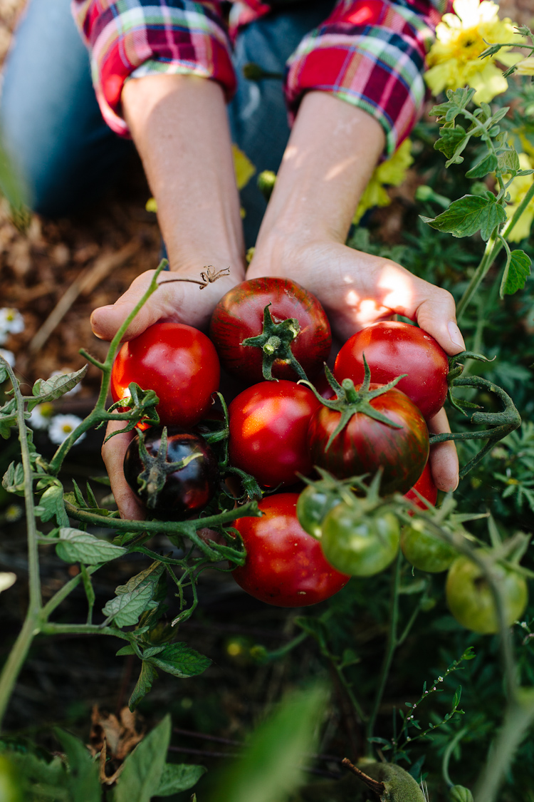 jardinage, santé, tomates