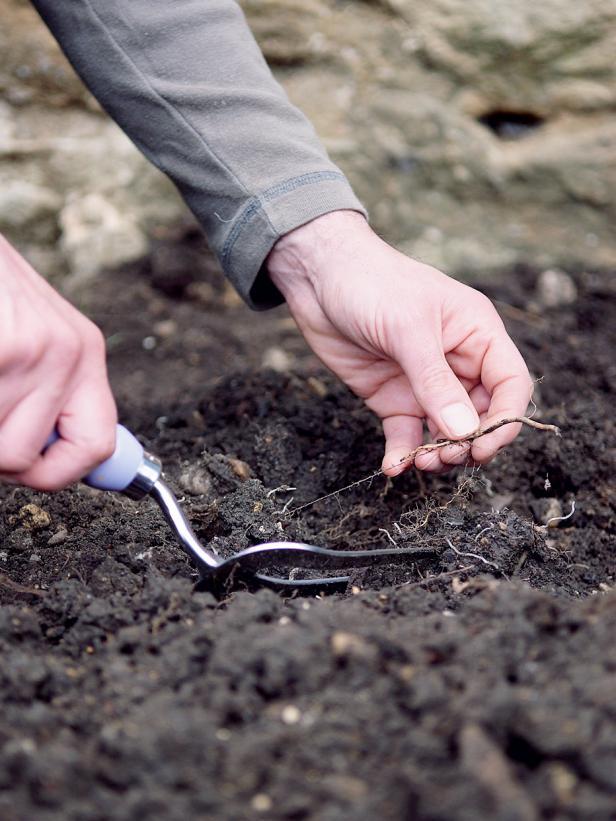 jardinage, santé, terre