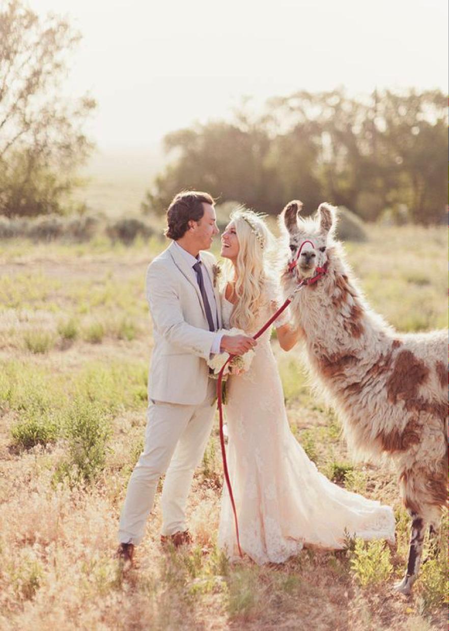 animal mariage