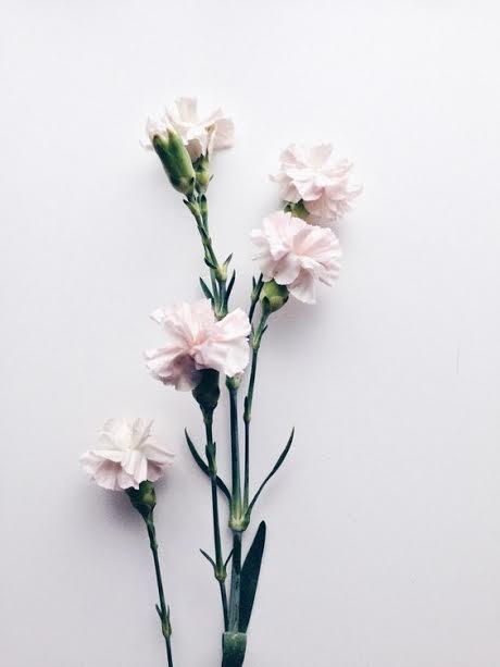 fleur beauté délicatesse