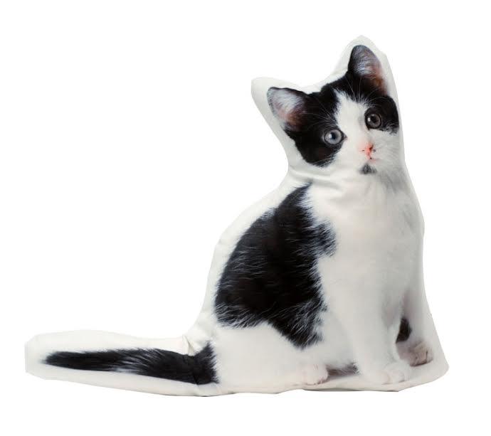 coussin chat maison