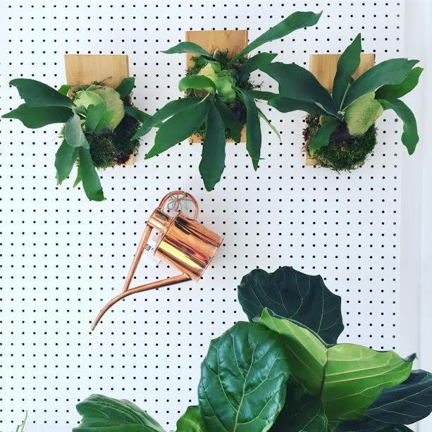 verdure boutique québec