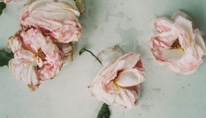 dried, flowers, fleurs, fanées