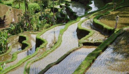 Bali, une île aux charmes multiples