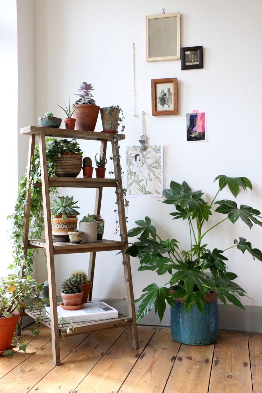 plantes décoration