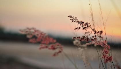 fleur mékong
