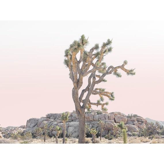 affiche, désert, été
