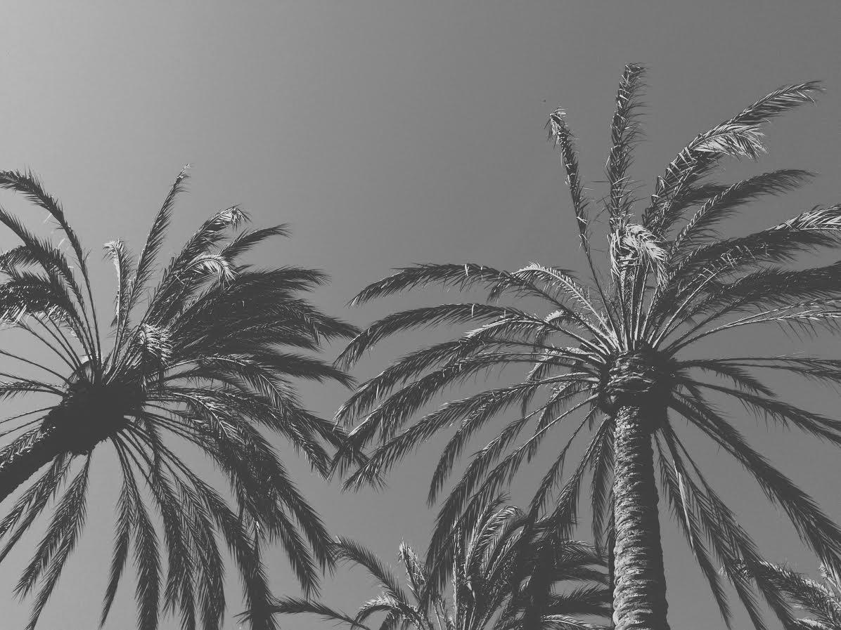 Palmiers, Voyage, Californie