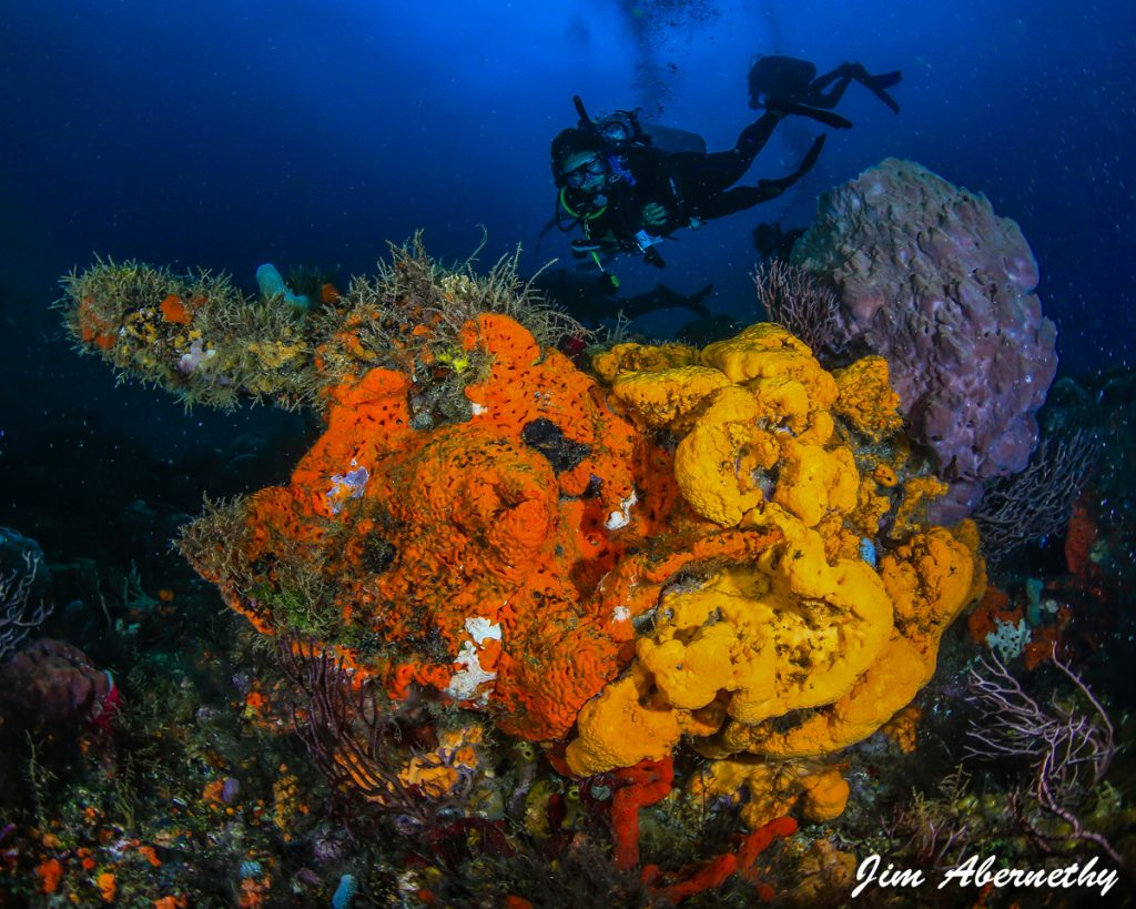 Camille Coral Reef