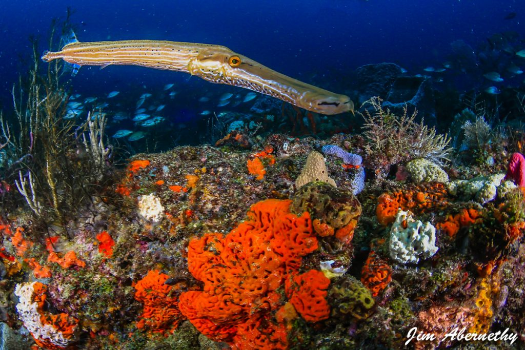 Coral reef by Jim Abernethy