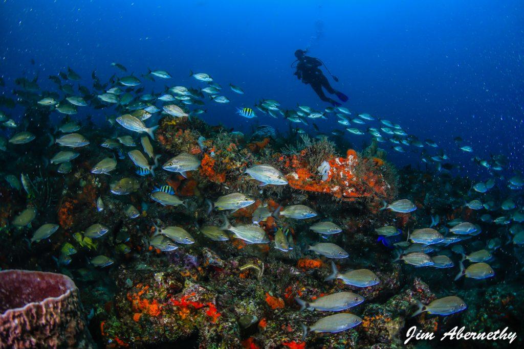 Camille Dg School of fish
