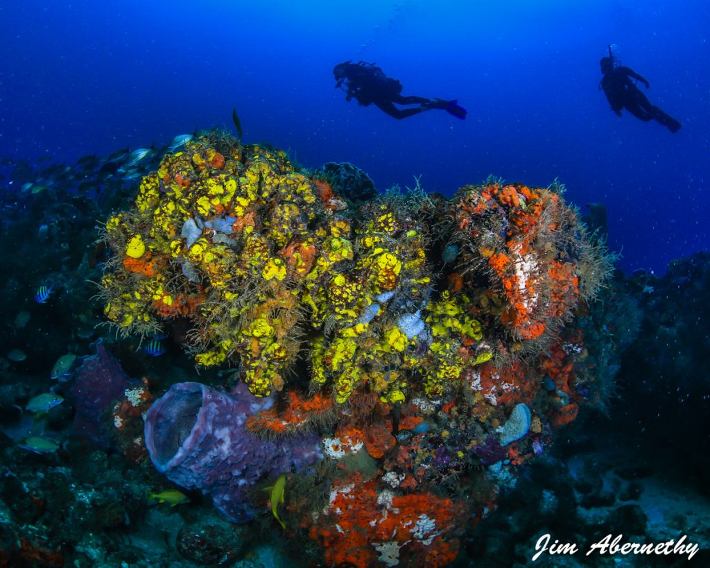 Camille diving coral reef