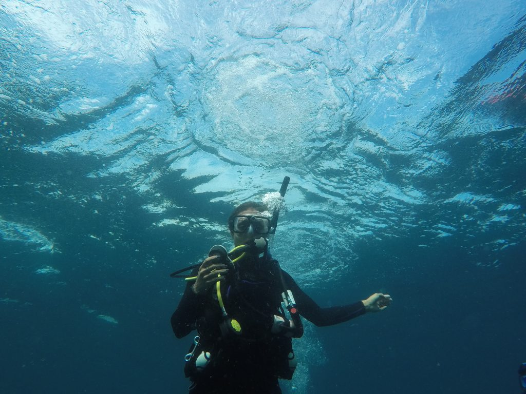 Diving in palm beach a beautiful trip idea for the adventurous camille diving xflitez Images