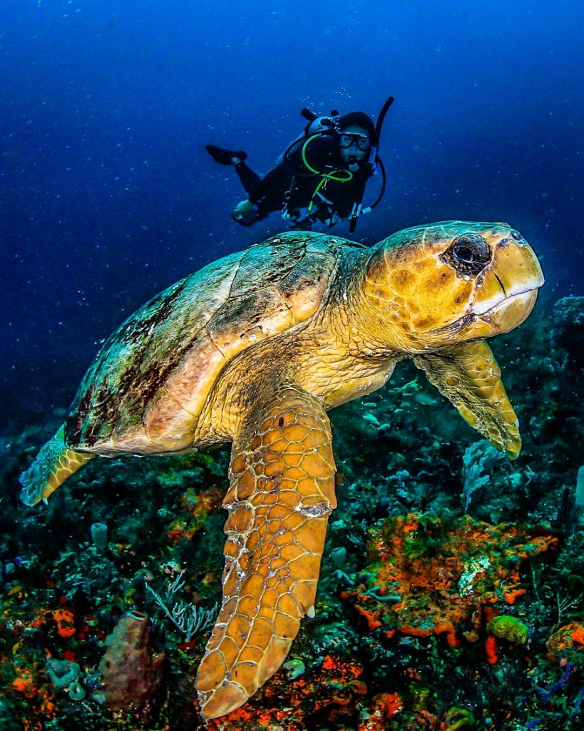Camille with a giant sea turtle