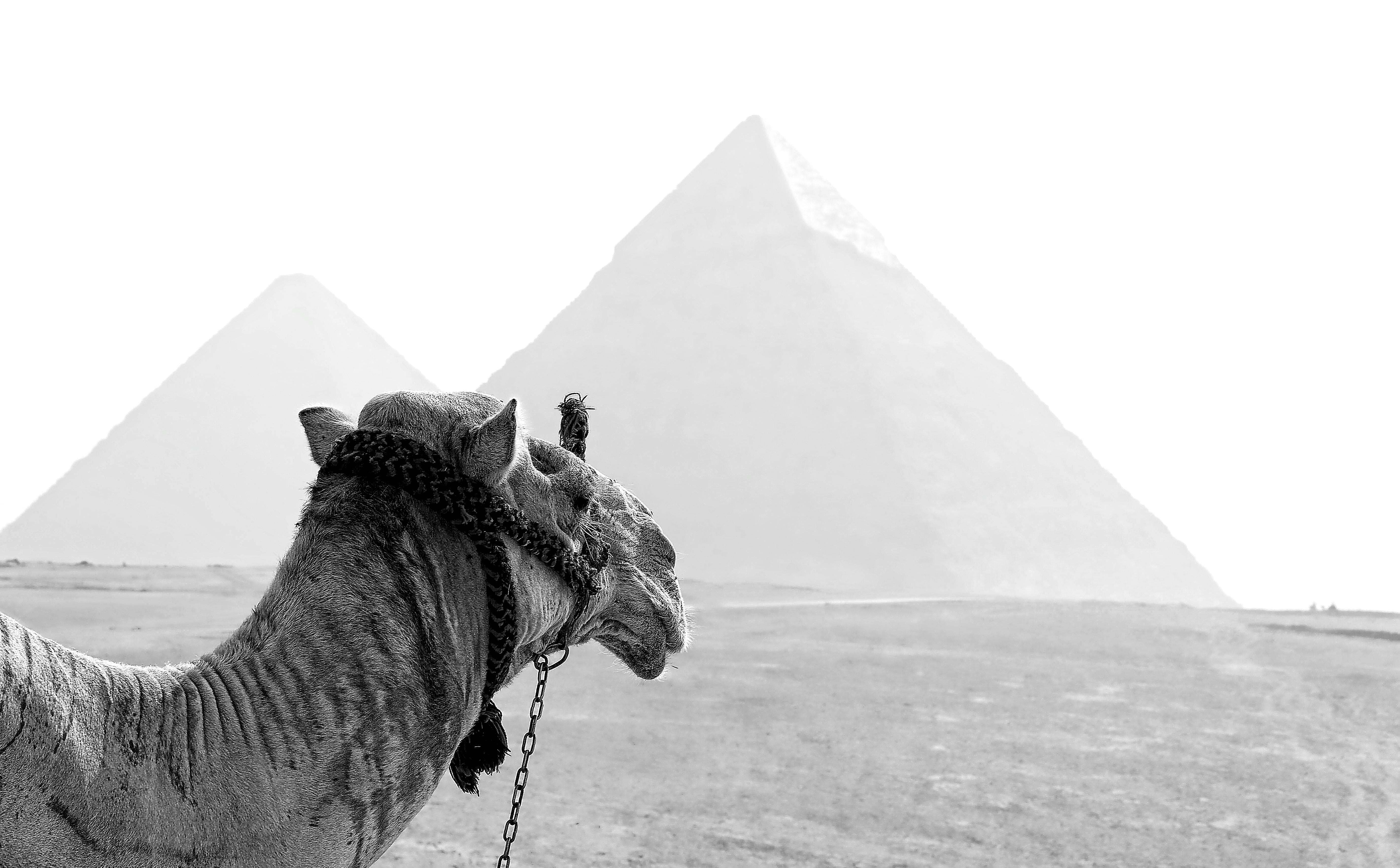 le caire, pyramide, egypte