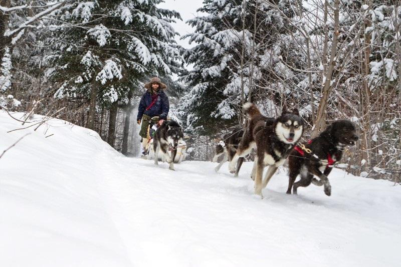 traineau chien aventure inukshuk québec hiver