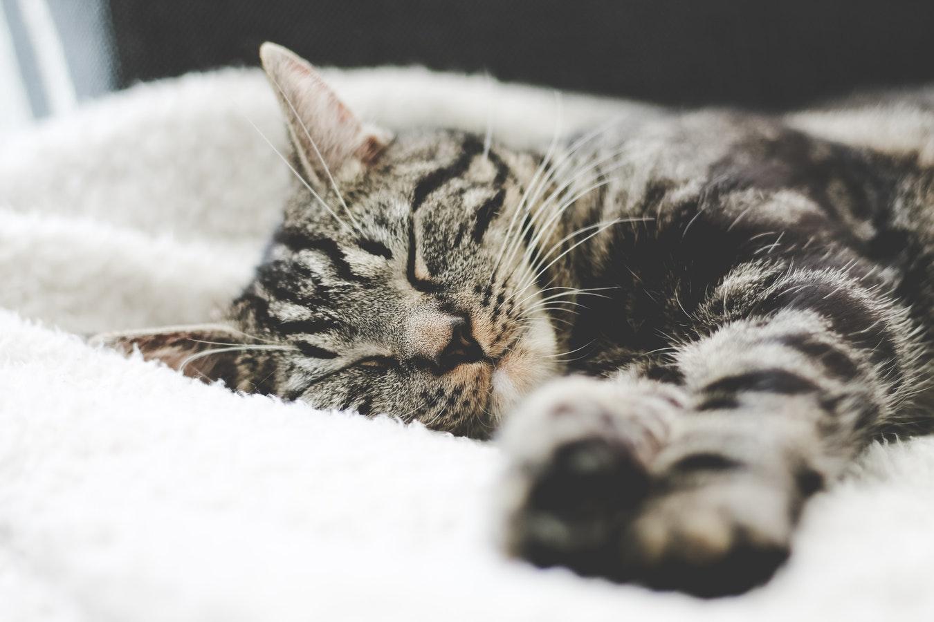Mon Chat Dort Sur Mes Pieds 12 astuces pour mieux dormir! - le cahier
