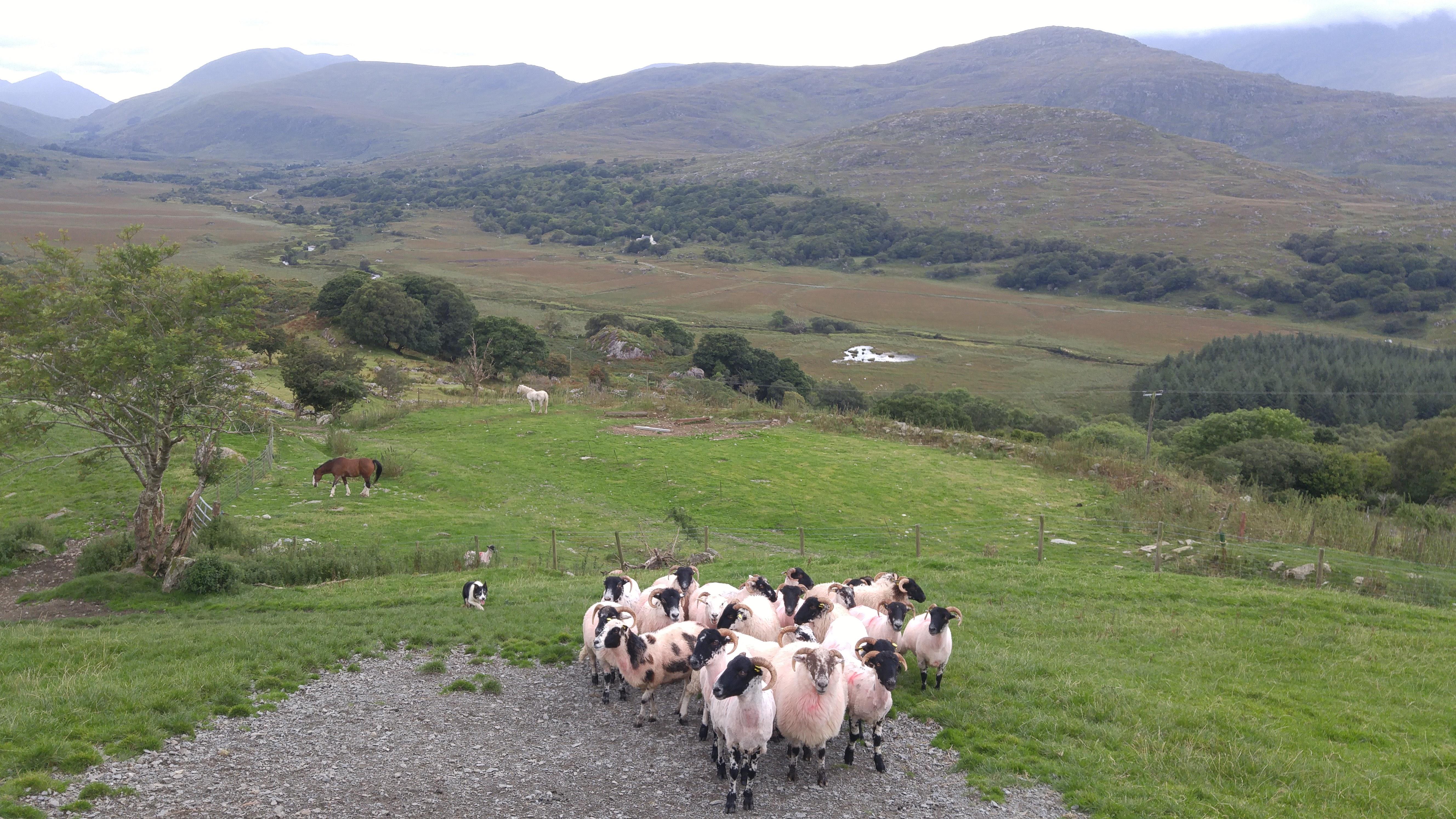 Voyage Irlande paysage