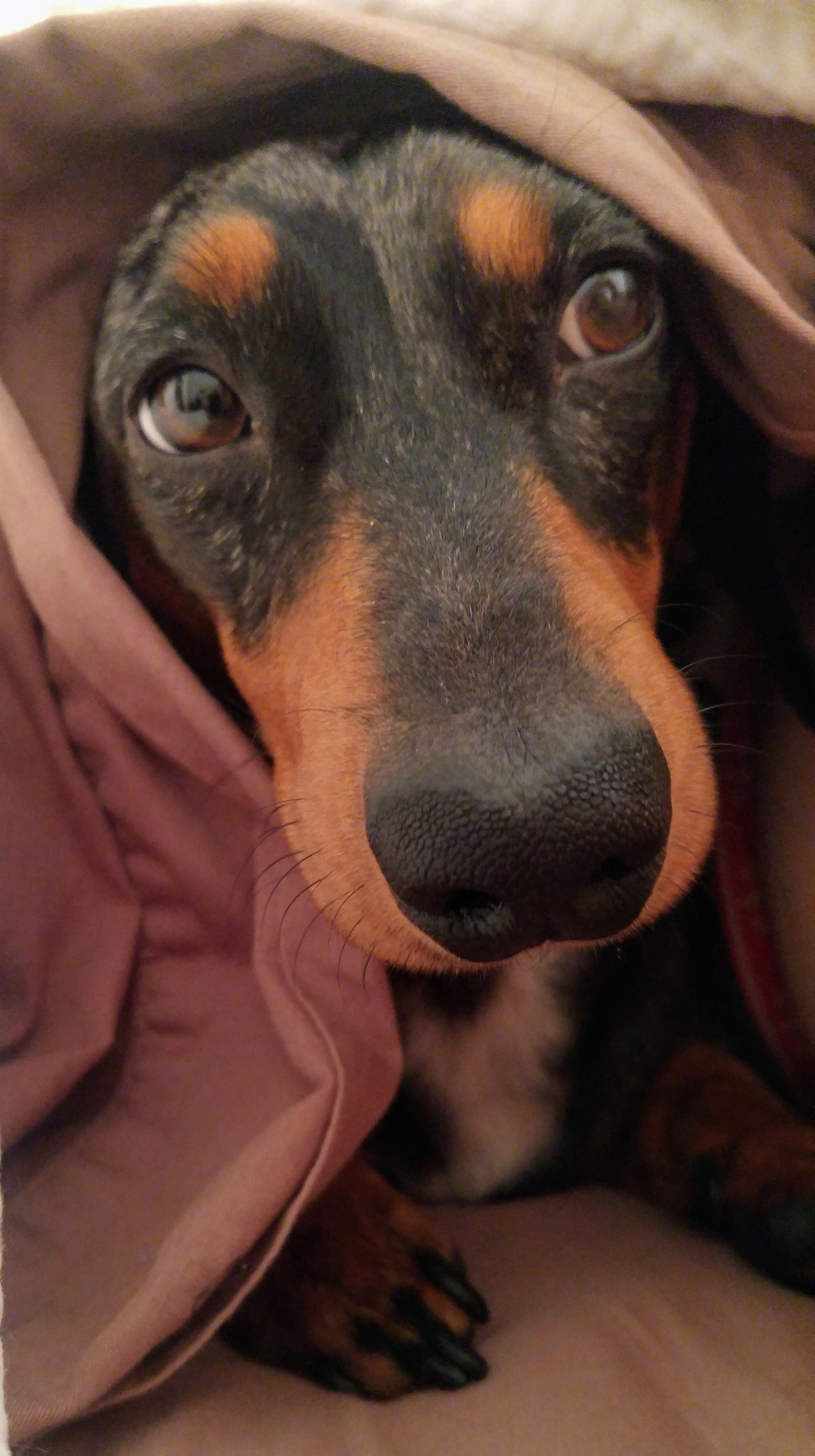animal compagnie conseils adoption