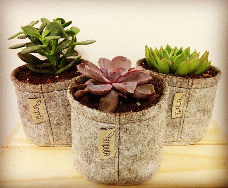 Plantes en pot