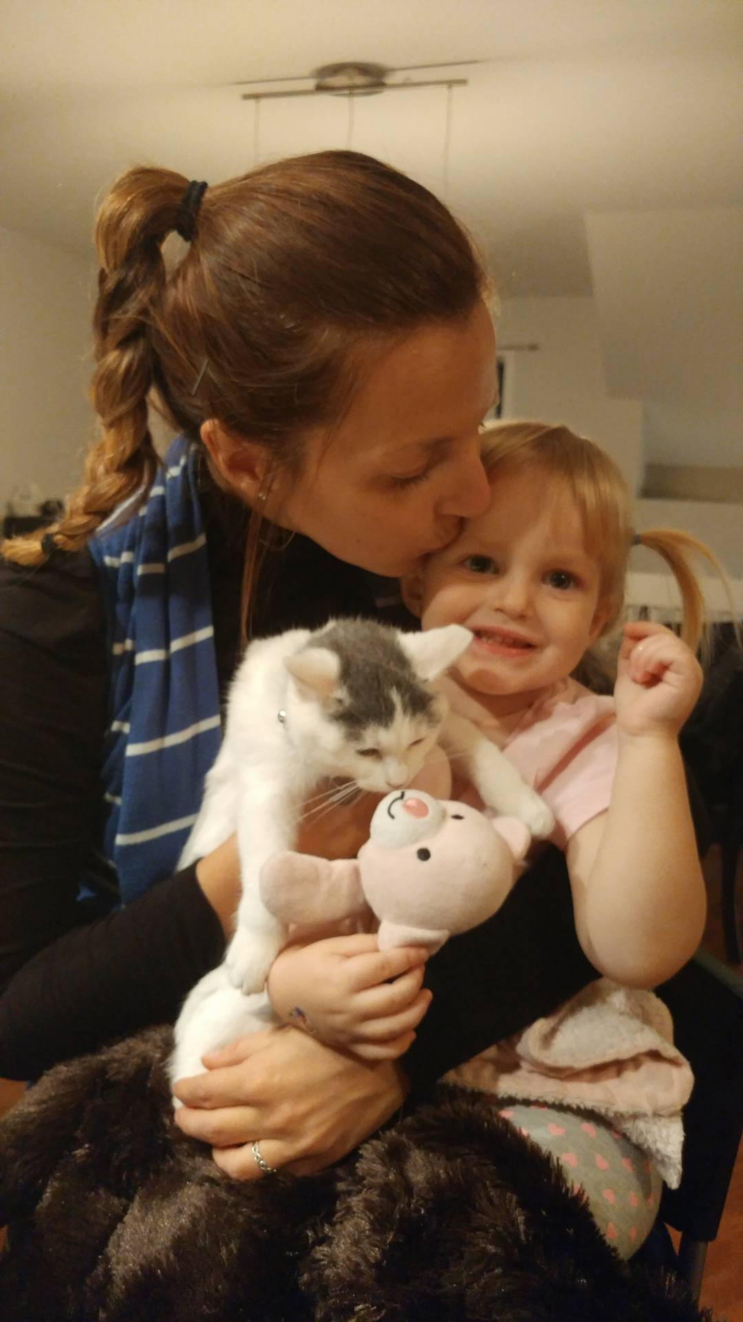 animaux compagnie chat enfant harmonie