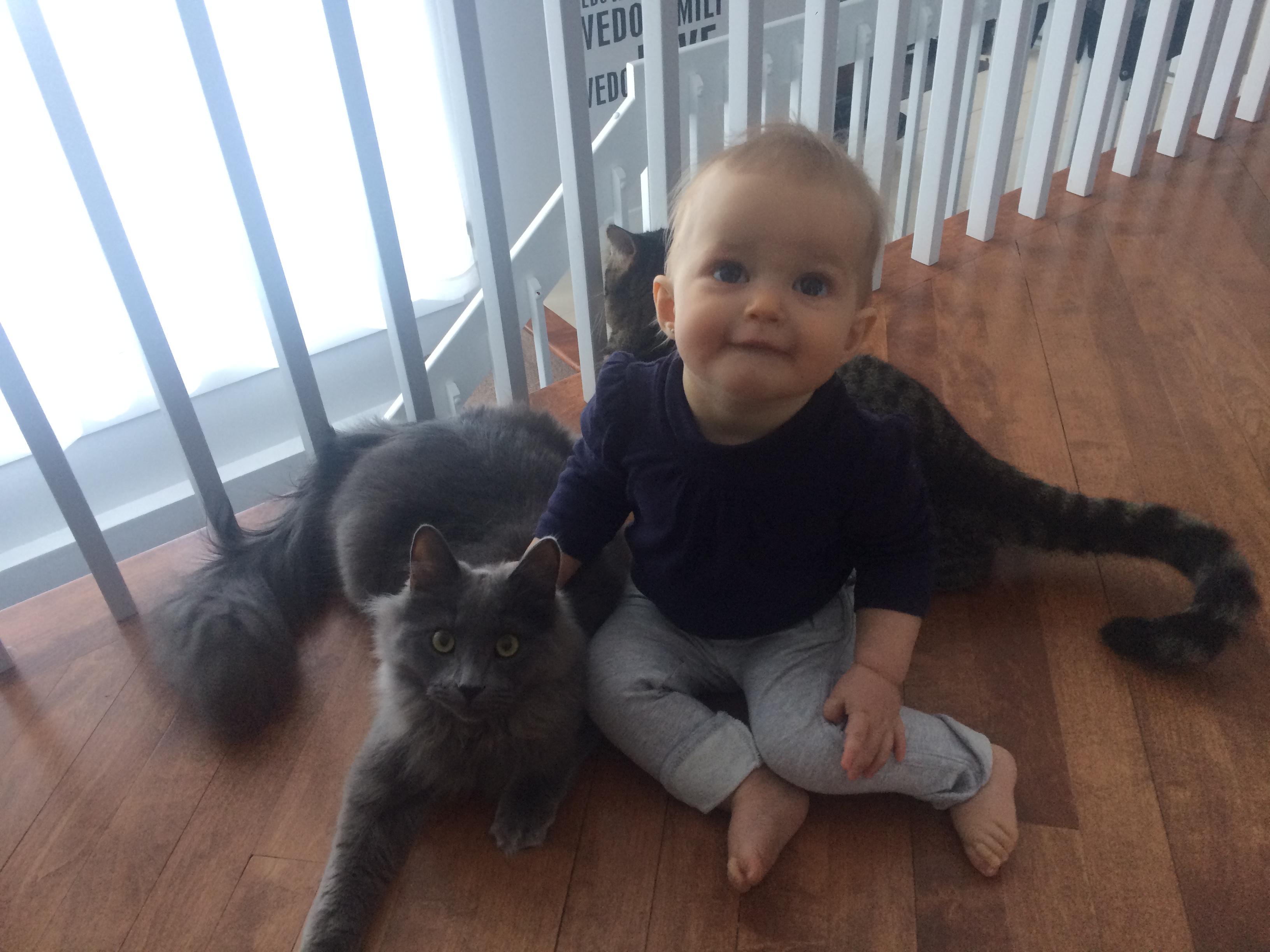 animaux compagnie chat enfant harmonie