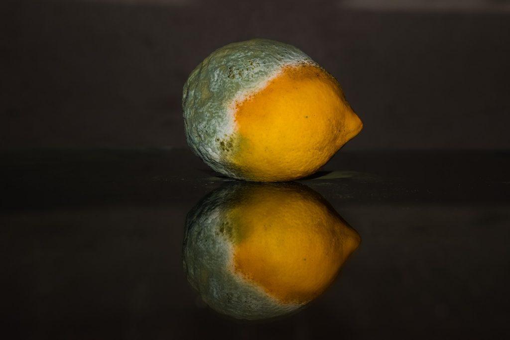 Citron moisi