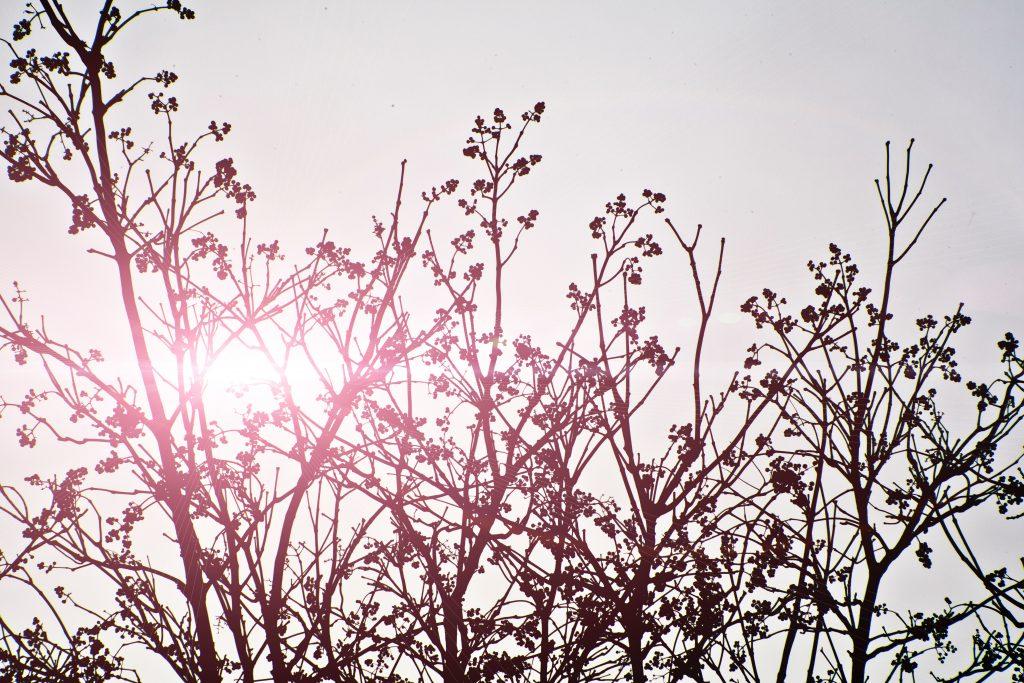 Branche d'arbre