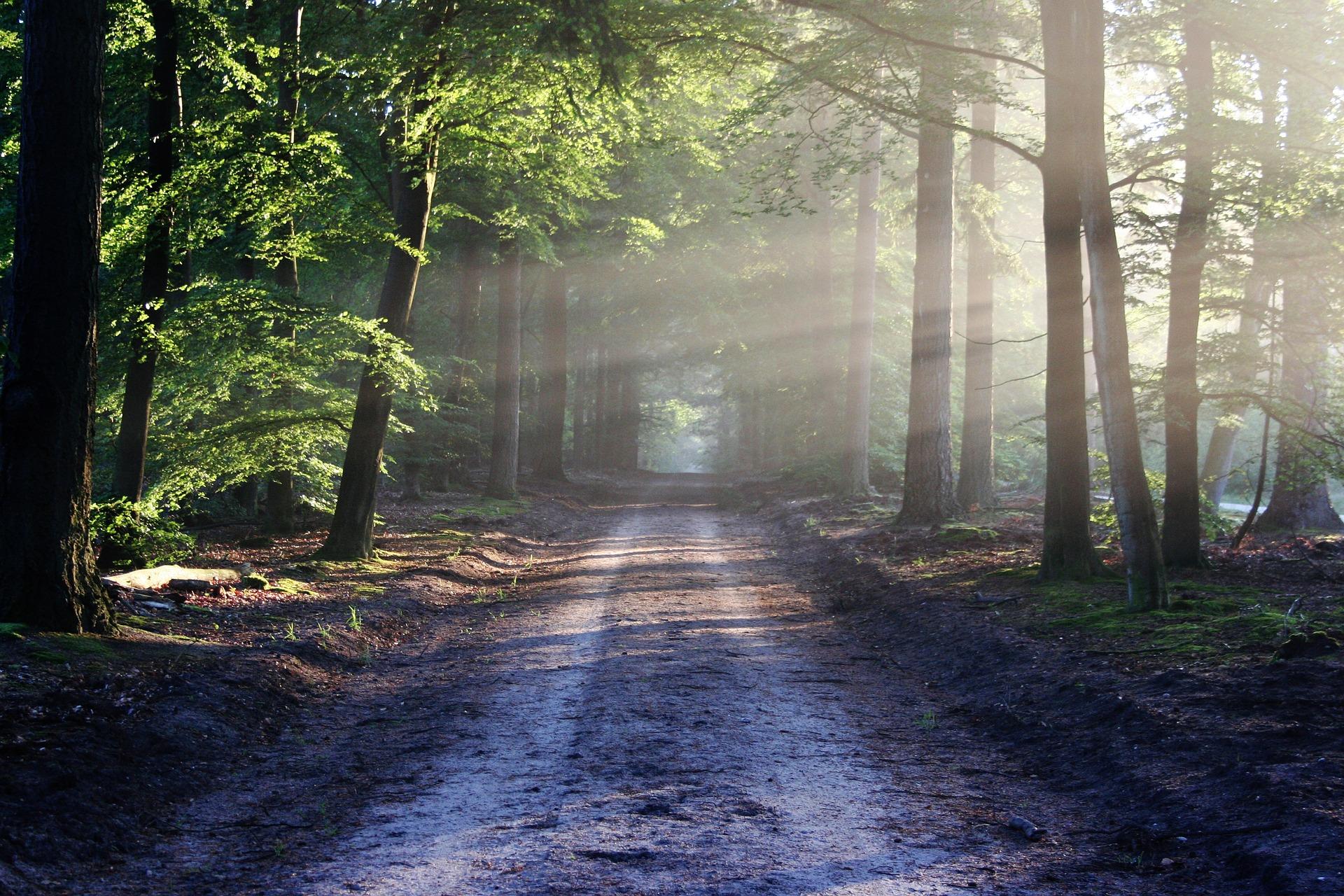foret chemin soleil