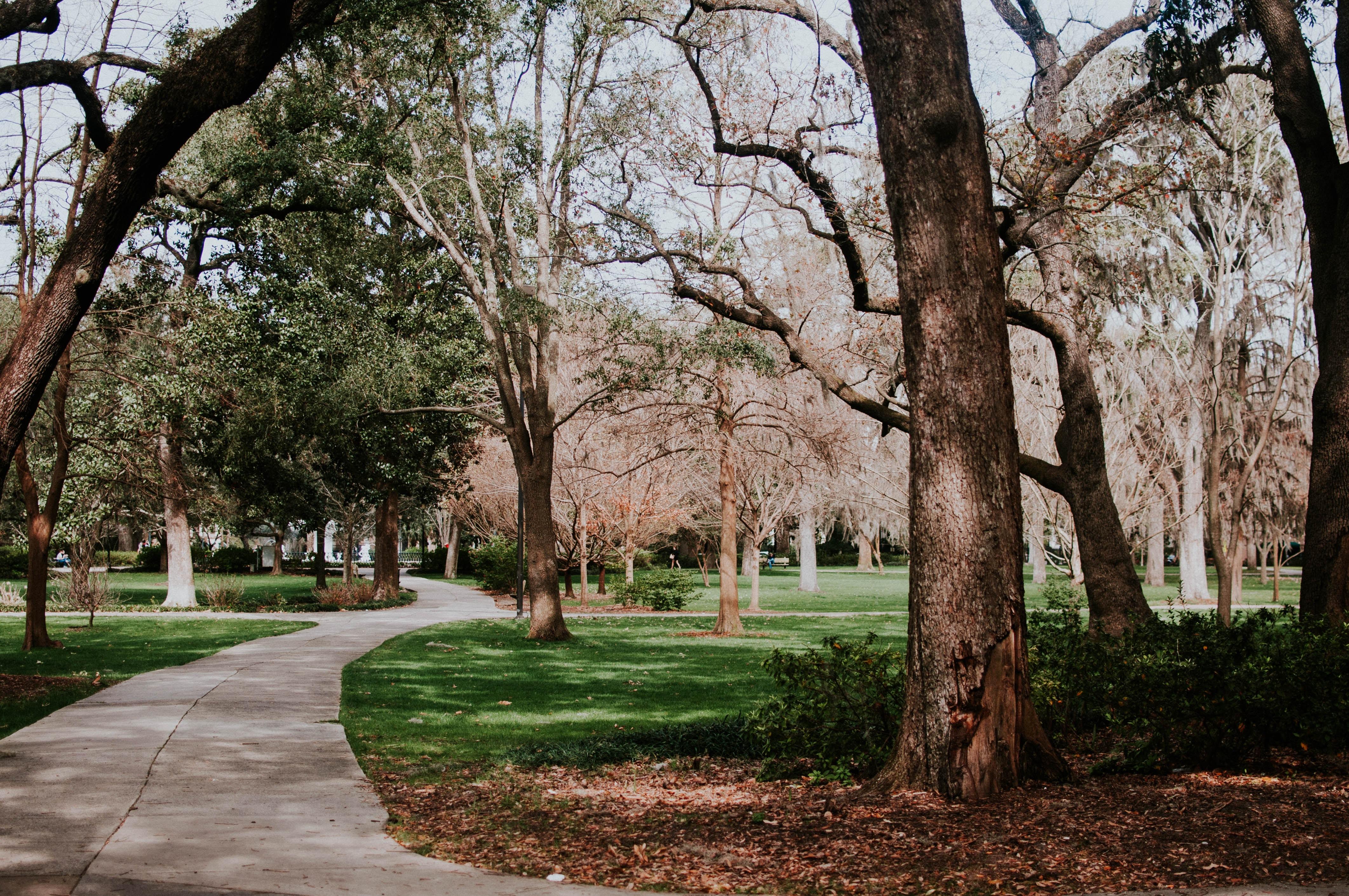 chemin parc arbres