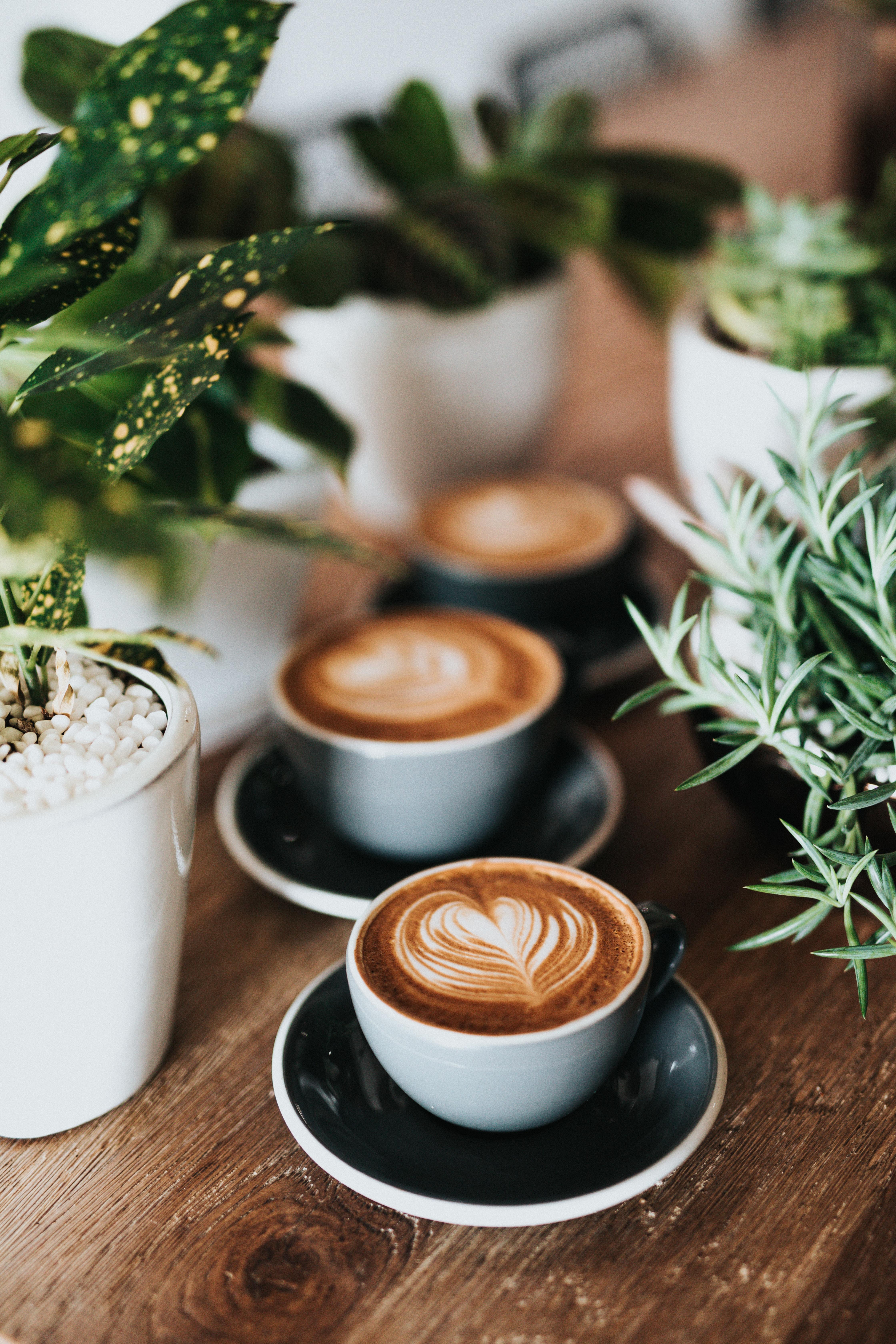 café plantes