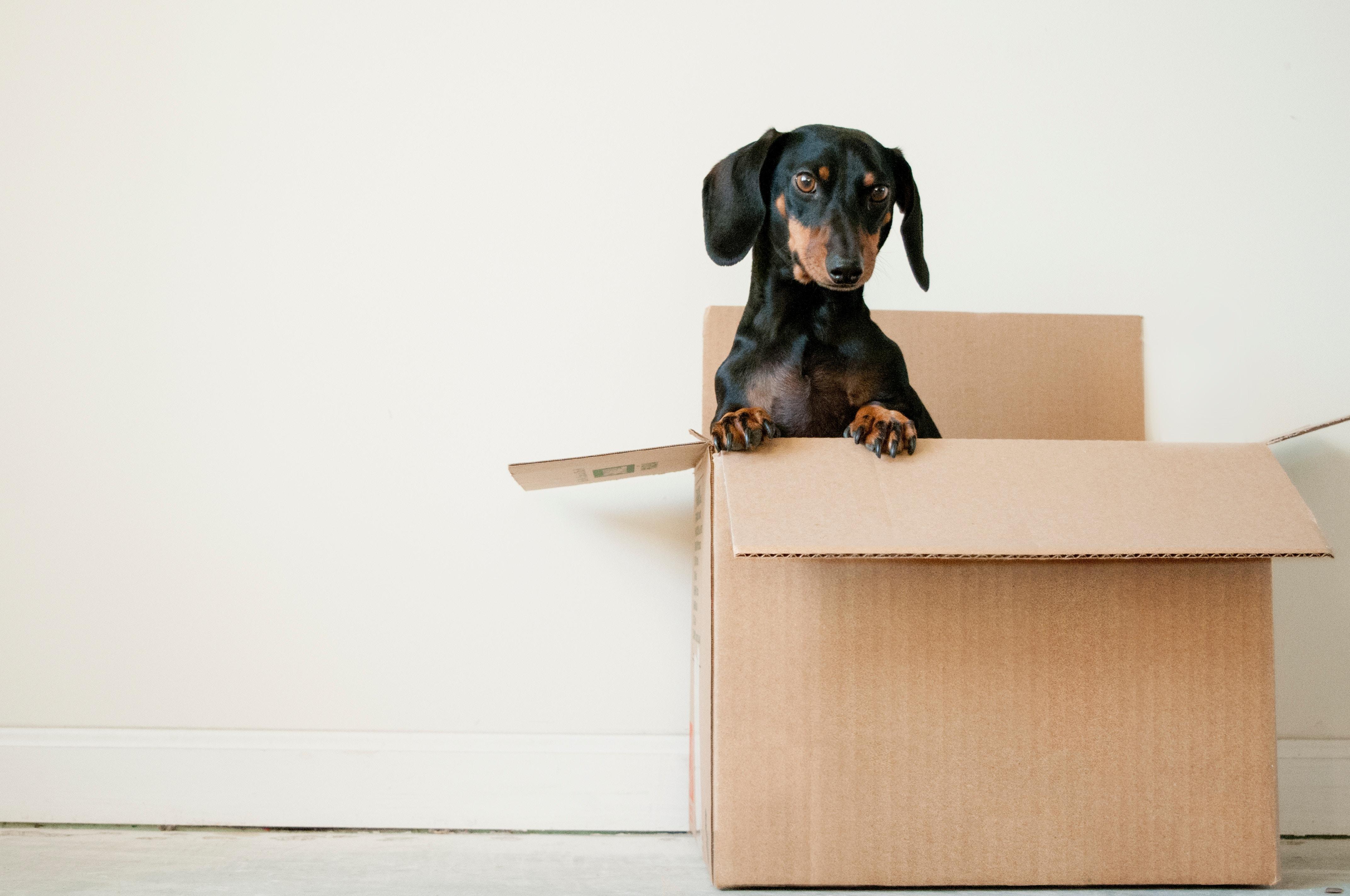 chien cute dans une boite