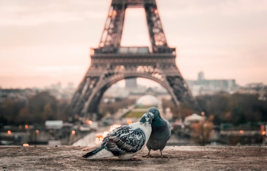 pigeons devant la tour eiffel