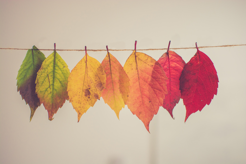 feuilles qui changent de couleur