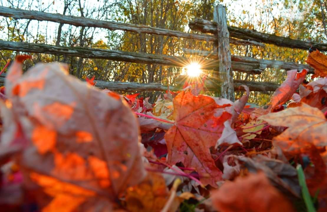 feuilles automne coucher de soleil