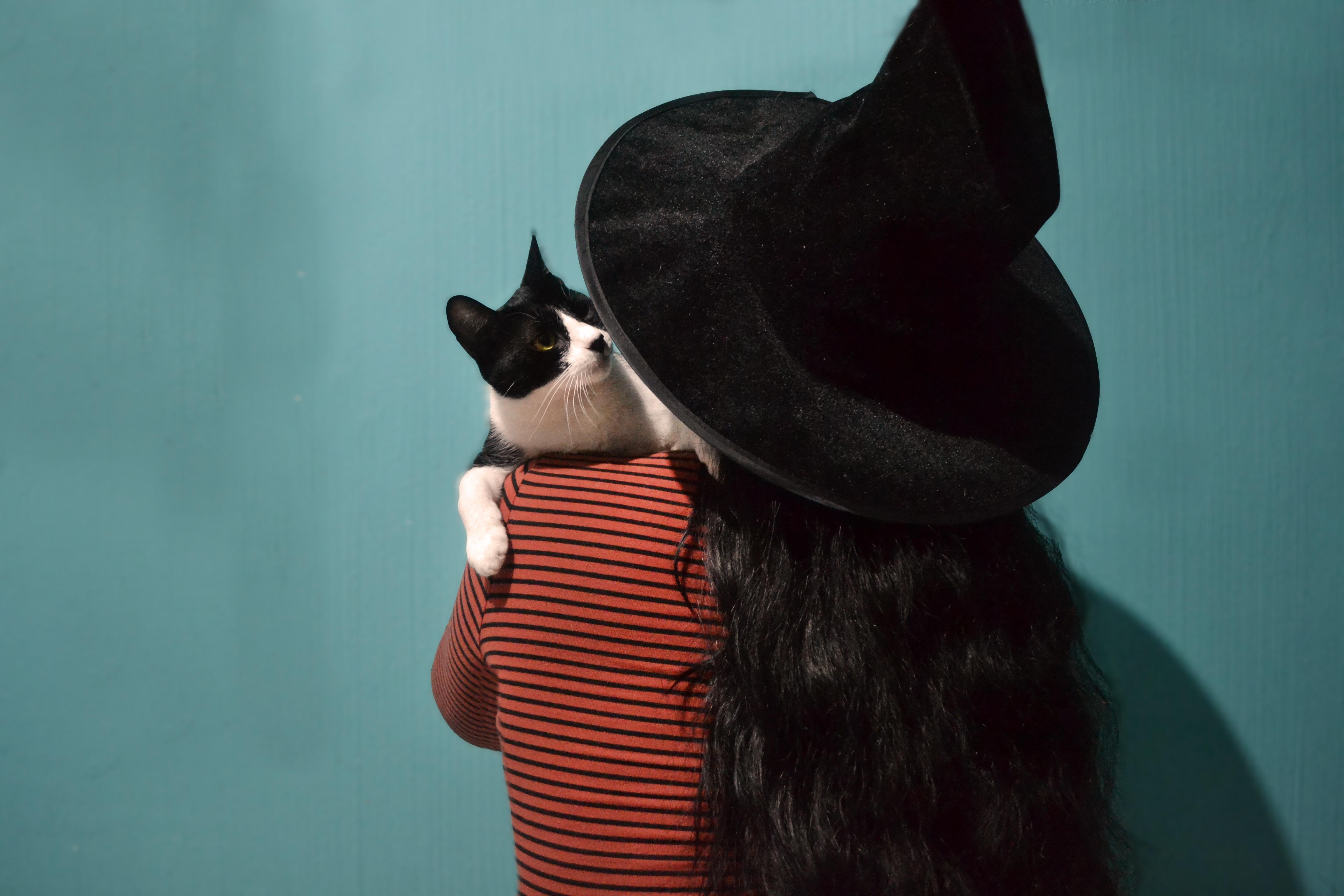 chat halloween sorcière