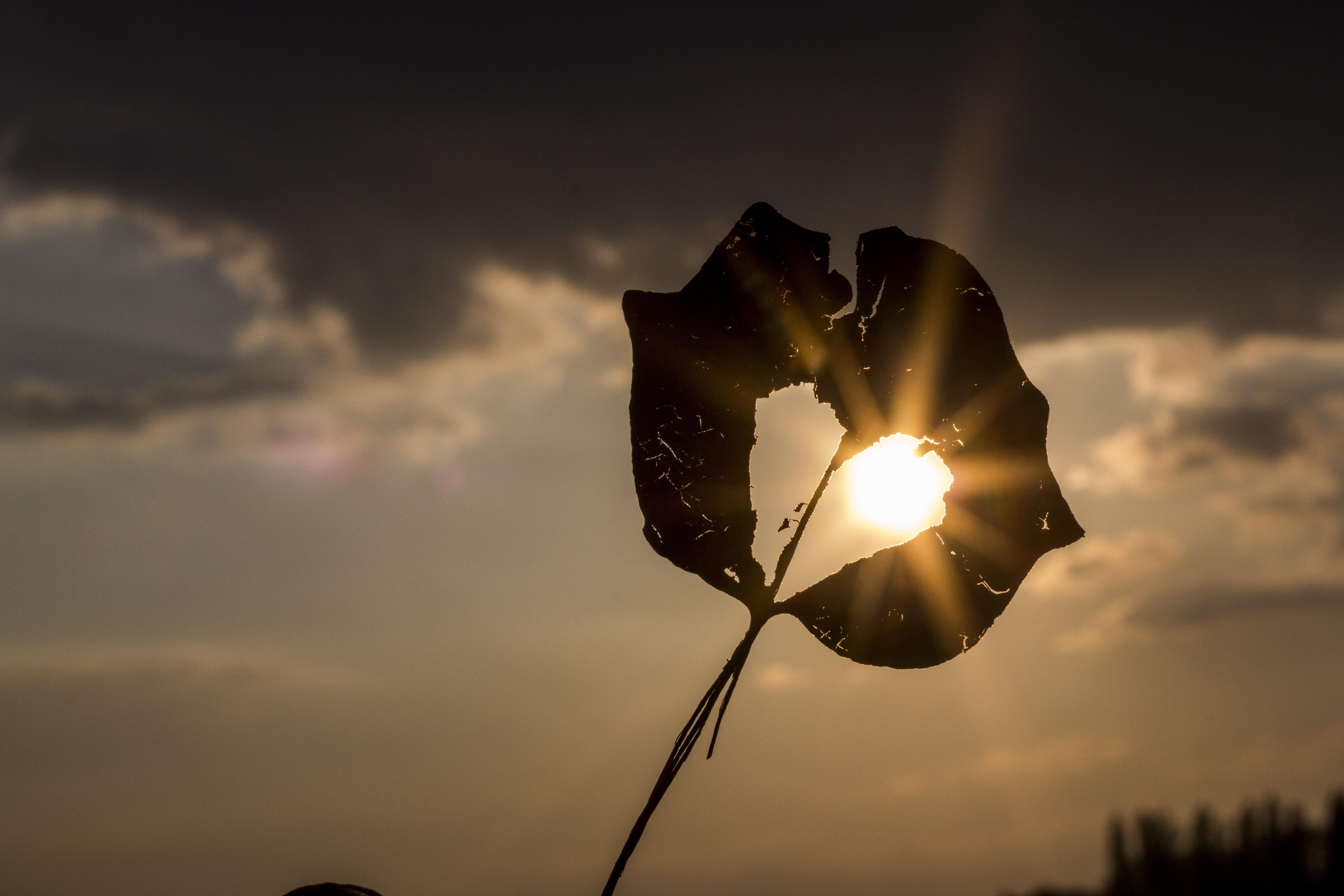 soleil rayon de soleil coeur brisé feuille